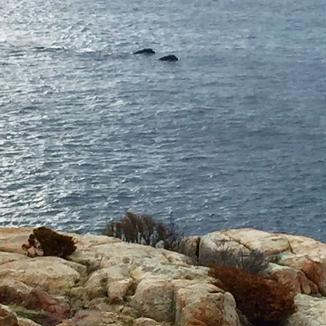 FOB sent photo in to Good morning gloucester  whales out window IMG_8894.JPG