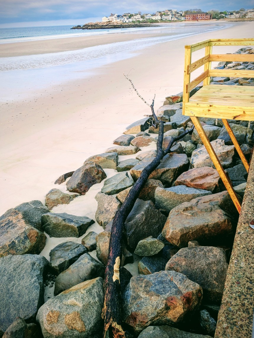 tree tossed up like toothpick_May 16 2018 Long Beach Mass-strong high tides twice daily ©c ryan.jpg