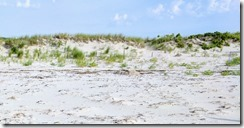 Good Harbor Beach piping plover enclosure ©c ryan_20170630_074839
