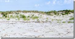 Good Harbor Beach piping plover enclosure ©c ryan_20170630_074839