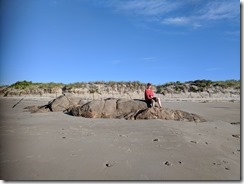 Good Harbor Beach sand erosion_piping plover enclosure_ Gloucester MA_ 20180616_071107 © c ryan