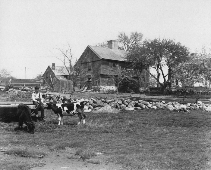 Ellery House with Cows