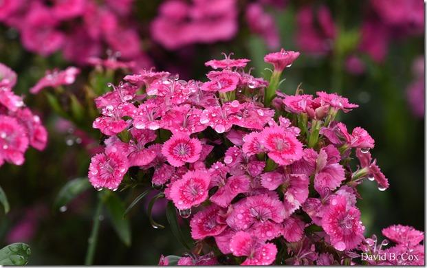 2018 8 18 Many Walks & Florals 037