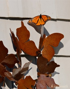 Patti Papows Butterfly Garden -11 2018