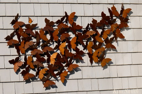 Patti Papows Butterfly Garden -12 2018