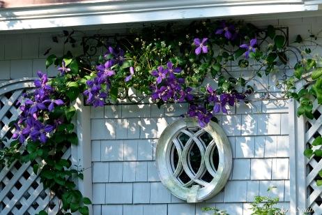 Patti Papows Butterfly Garden Purple Clematis 2018