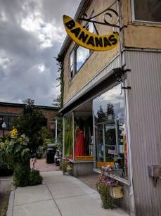 Sunflowers at every turn _ Bananas Main Street _ downtown Gloucester Mass©c ryan 2018 Aug 30 (4)