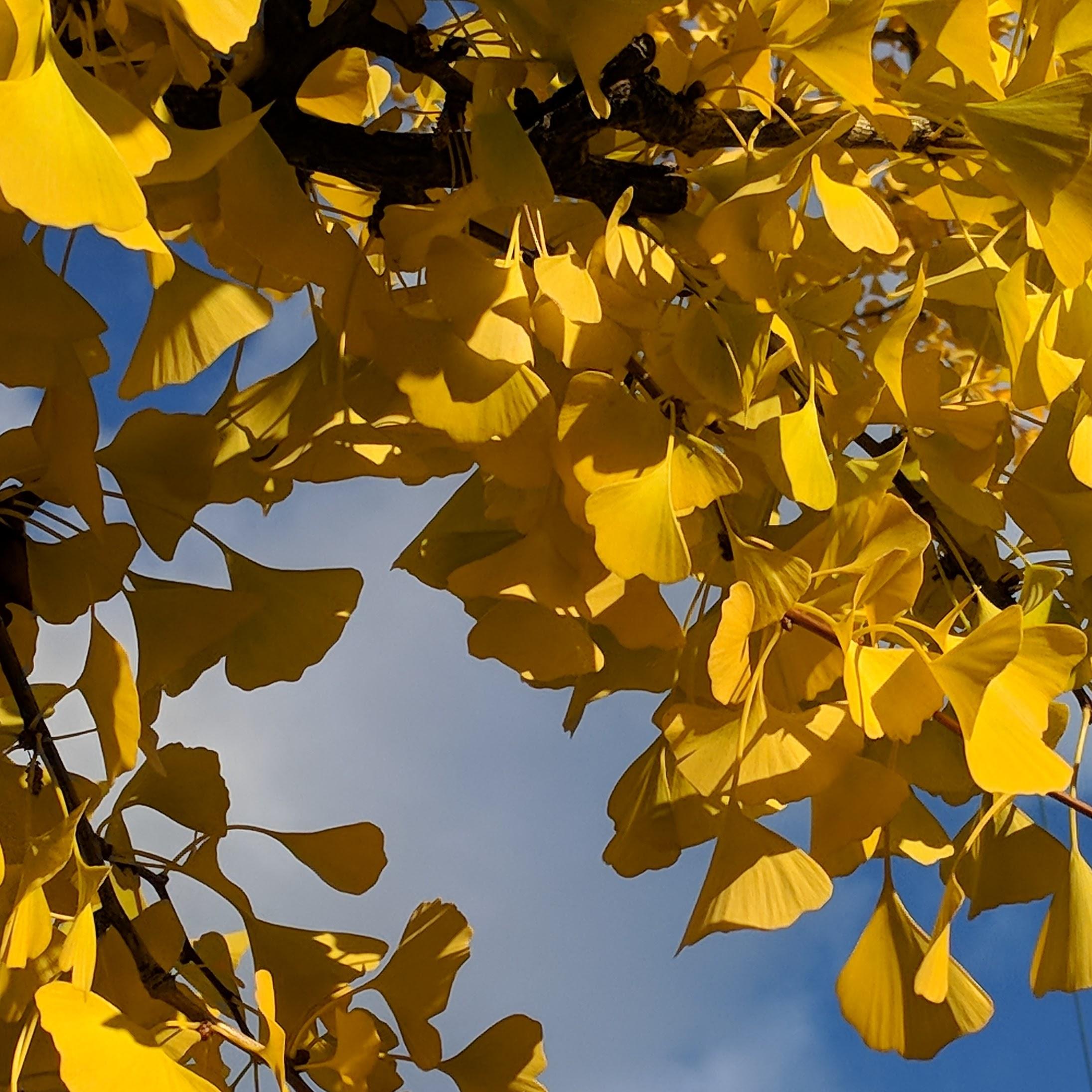 Colors of the season - Fall Gloucester Cape Ann ©c ryan_20181025