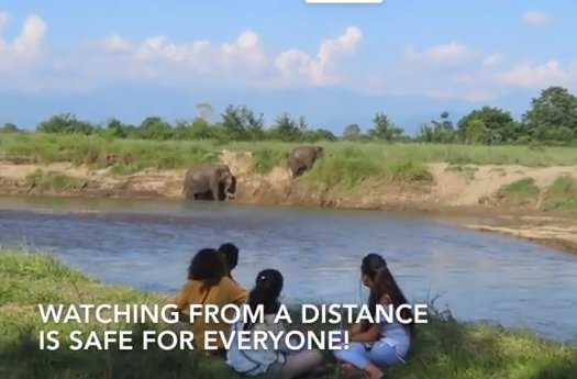 Nepal elephant preserve still from video.jpg