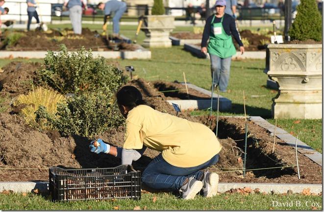 2018 11 7 Gen Gardeners Replanting Tulips 065