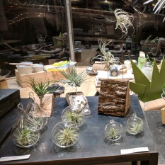 AIR PLANTS_goodlinens studio and homegoods_20181115_©c ryan_211505