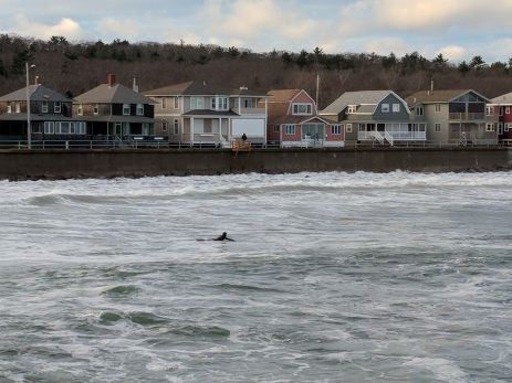 Arduous paddling_November surf_Long Beach_Gloucester MA_445PM_20181127_two hours after high tide©c ryan
