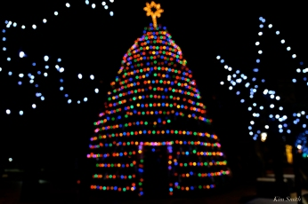 Lobster Trap Christmas Tree Gloucester Massachusetts -7 copyright Kim Smith