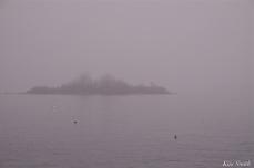 Ten Pound Island Fog Gloucester Massachusetts -2 copyright Kim Smith
