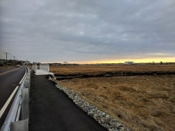 winter yellows from the walkway_Good Harbor Beach_Thatcher Road marsh_Gloucester MA_20181224_© c ryan