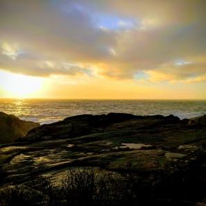 winter yellows_sunrise_81222_730am_© c ryan