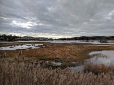 before view across the marsh from rt 128 _ looking to annisquam river bridge_ nov 9_2018© catherine ryan