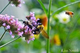 mary-prentiss-inn-urban-pollinator-garden-cambridge-ma-26-copyright-kim-smith