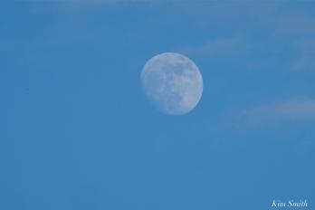 wolf moon january moon copyright kim smith