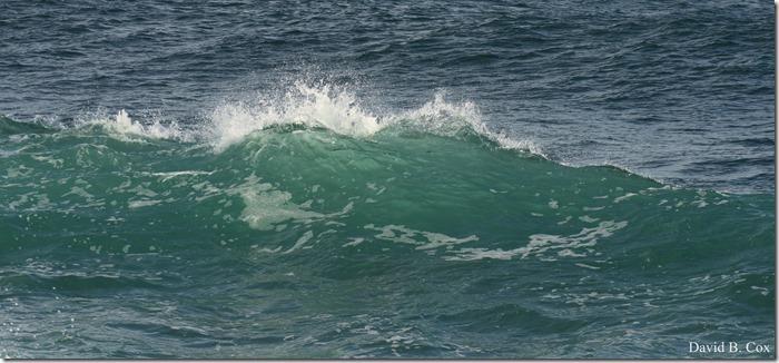 2019 02 21 Super High Tide @ G.H. & Back Shore 109