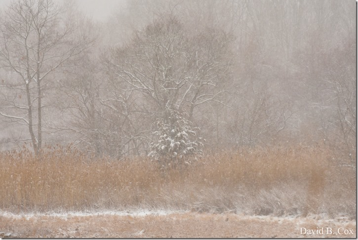 2019 2 18 Lorrain's B'thday & Snow 141
