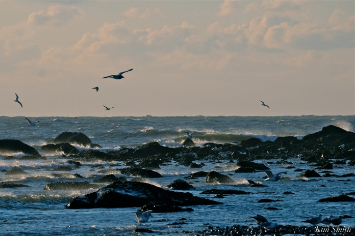 Gulls and Surf copyright Kim Smith