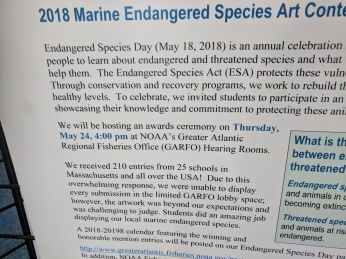 2018 endangered species art contest 2018 NOAA headquarters Gloucester Mass_20180507_© catherine ryan (14)