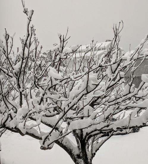 trees coated_snow storm March 4 2019 about a foot of snow Gloucester massachusetts _20190304_© catherine ryan
