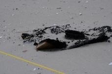 Bonfire Piping Plover Enclosure Good Harbor Beach 4-24-19 cKim Smith