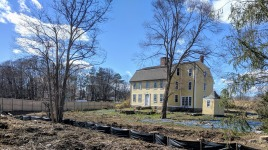 hello whats this hyacinth patch revealed and a favorite forsythia patch_20190416_now Cape Ann Museum © catherine ryan