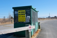 No Dogs Good Harbor Beach Gloucester copyright Kim Smith
