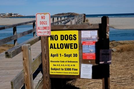 No Dogs Good Harbor Beach Gloucester Footbridge Entrance copyright Kim Smith
