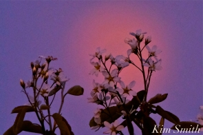 Full Flower Moon May Gloucester Massachusetts -1 copyright Kim Smith