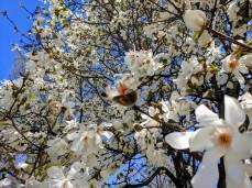 spring is looking up spring blooms blue sky_20190506_c ryan