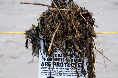 vandalism-signage-piping-plover-nesting-area-good-harbor-beach-gloucester-copyright-kim-smith