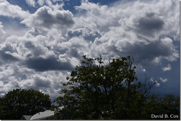 2019 6 22 Very Misc Egrets Beach Clouds etc 235