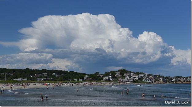 2019 6 22 Very Misc Egrets Beach Clouds etc 239