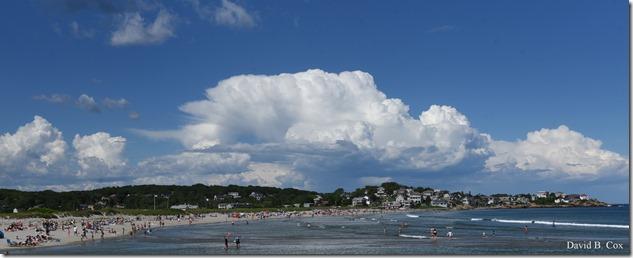 2019 6 22 Very Misc Egrets Beach Clouds etc 241