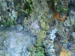 artist DEBORAH BROWN detail from Moss and Lichen painting courtesy photo