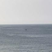 whale 15 © Jeanne Blake