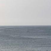 whale 16 © Jeanne Blake