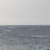 whale 17 © Jeanne Blake