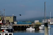 KRaken Fishing Boat Helicopter Filming Gloucester Harbor copyright Kim Smith - 10