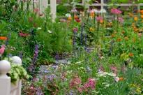Urban Pollinator Garden Mary Prentiss