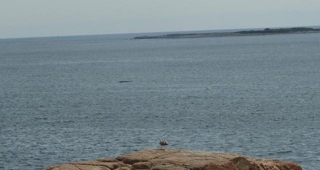 whale © Jeanne Blake.jpg