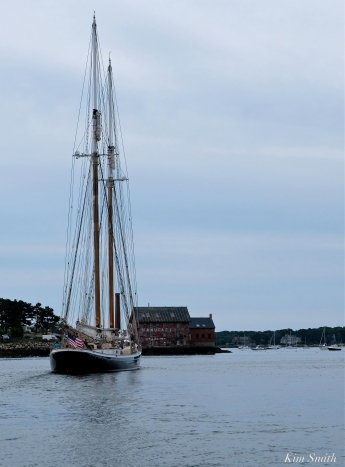 Schooner Columbia Gloucester Harbor copyright Kim Smith