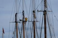 Schooner Festival Gloucester Parade of Sail copyright Kim Smith - 10 copy