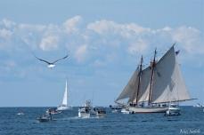 Schooner Festival Gloucester Parade of Sail copyright Kim Smith - 49 copy
