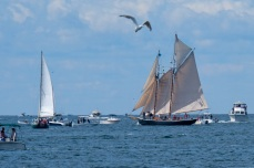 Schooner Festival Gloucester Parade of Sail copyright Kim Smith - 51