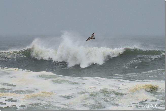 2019 10 12 Storm Surf & Blvd 040